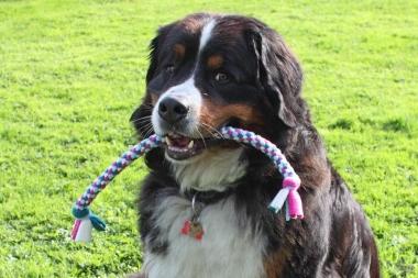 Hundespielzeug Zergel hell, groß