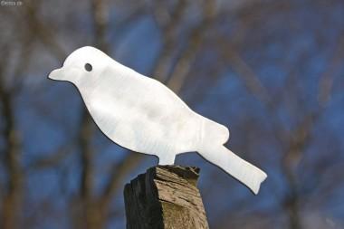 Zaunvogel