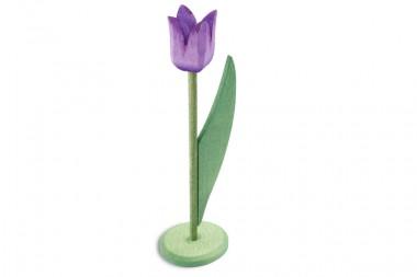 Holztulpe geöffnet, lila