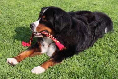 Hundespielzeug Zergel